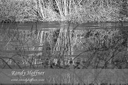 reflection-print-ijcopm.jpg