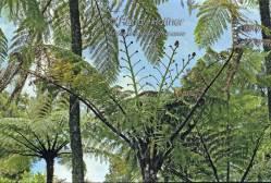 Ferns1.jpg